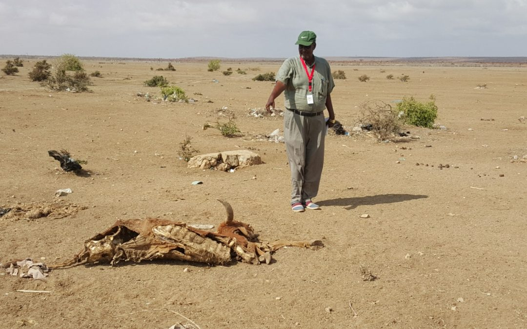 Drought in Somalia alleviation